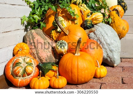 Pumpkins decorated in front of the main door of house during Thanksgiving week - stock photo
