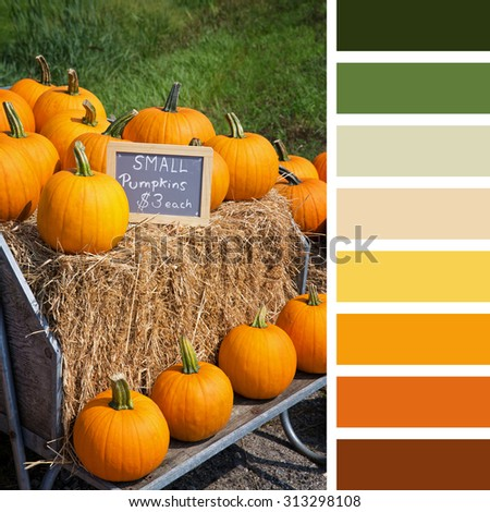 Pumpkins for sale, displayed on hay bales, In a colour palette with complimentary colour swatches. - stock photo
