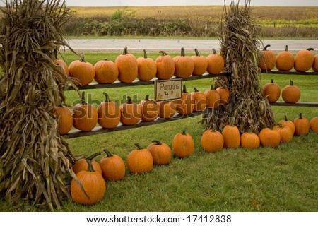 Pumpkins for sale in fall - stock photo