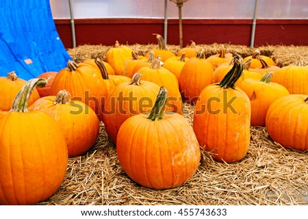 Pumpkins for sale on autumn market