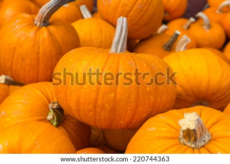 Pumpkins freshly picked on display at the farmers market in bulk