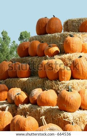 Pumpkins Galore - stock photo
