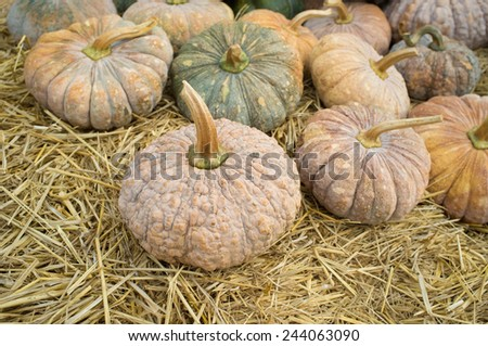 Pumpkins, gourds and squashes in a colorful assortment