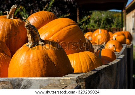 Pumpkins in a crate - stock photo