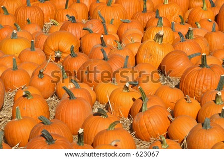 Pumpkins in a patch - stock photo