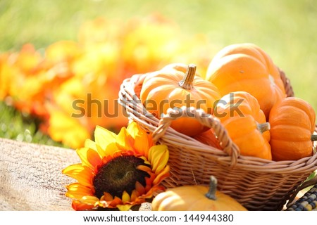 Pumpkins in basket and decorative corns. Defocused colorful leaves in the background - stock photo