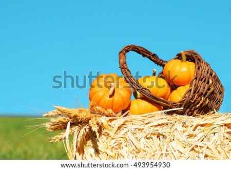Pumpkins in Basket with Ears of Wheat on Straw Bale. Outdoor. Harvest