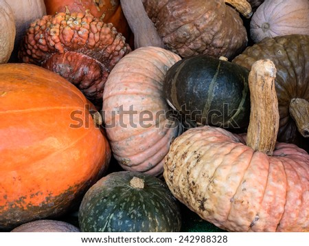 Pumpkins in different colors for decoration at Campo dei Fiori, Rome