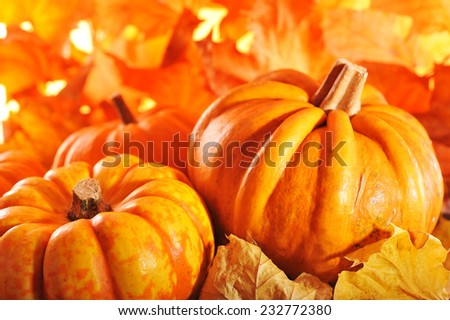 pumpkins in front of highlighted orange oak leaves - stock photo