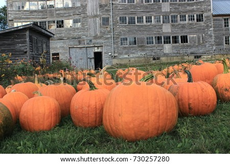Pumpkins in front of old Building