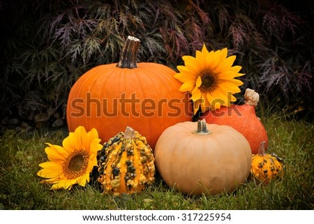Pumpkins in garden, Photo with vignette.  - stock photo