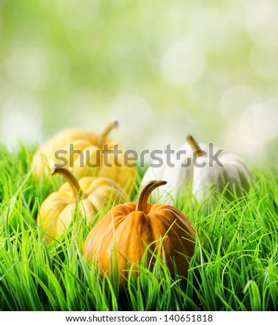 Pumpkins in green grass on natural background. - stock photo