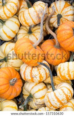 pumpkins in the autumn as a background