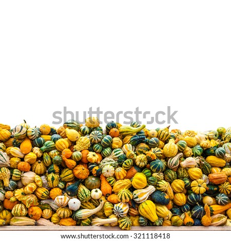Pumpkins, mums, and gourds! It's time to fall-decorating, and pumpkin and gourd hunting. - stock photo