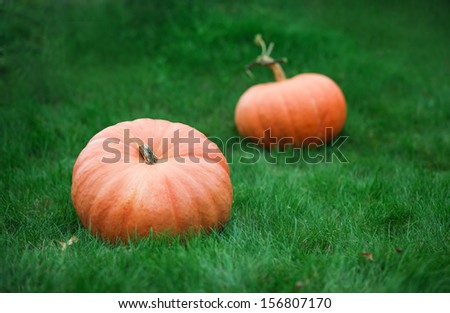 pumpkins on grass - stock photo