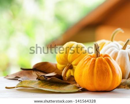 Pumpkins on rural landscape background. - stock photo