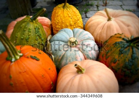 Pumpkins / Pile of colorful pumpkins perfect for picking. - stock photo