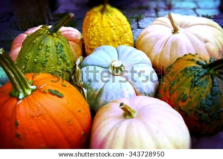 Pumpkins / Pile of Pumpkins! These ripe, plump beauties were perfect for the picking. Royalty free stock image. - stock photo
