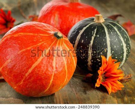 Pumpkins . Selective focus - stock photo