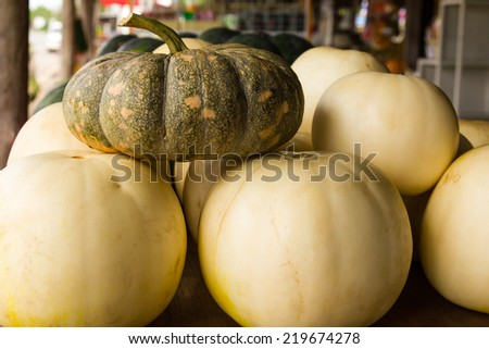 Pumpkins stacked on top of a cantaloupe Unlike strains placed on the market. - stock photo