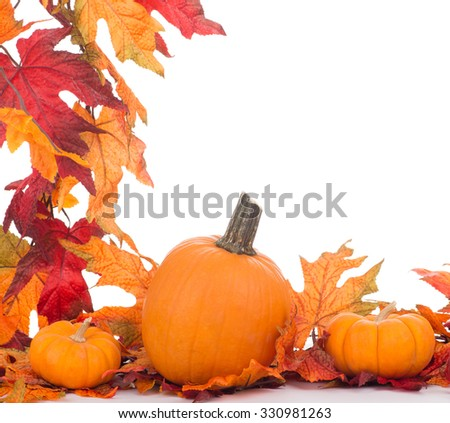 Pumpkins with a leaf border on a white background
