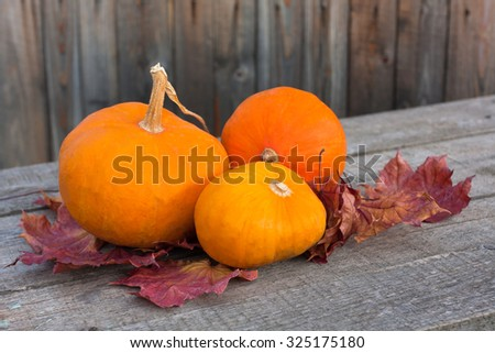 pumpkins with autumn leaves on wooden board