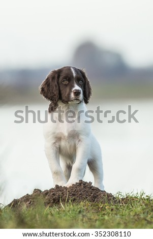 Pup is looking - stock photo