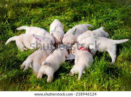puppies eating from one bowl - stock photo