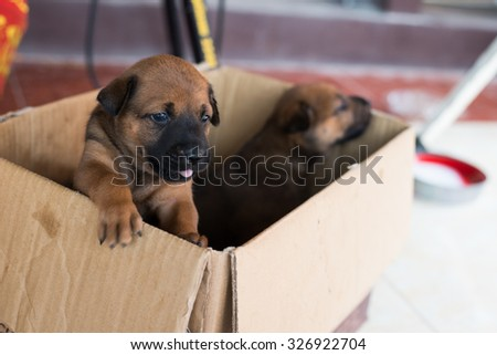 puppies in the box - stock photo