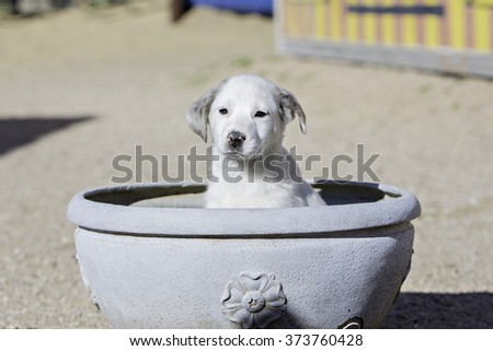 Puppies sitting in a flower pot - stock photo