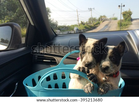 Puppies with a bucket in car.