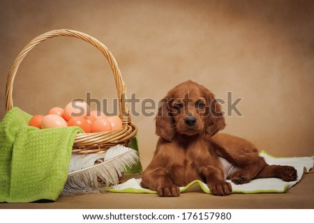 Puppy and basket with easter eggs, horizontal, studio