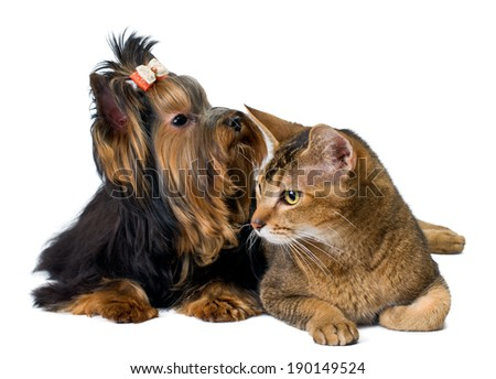 Puppy and cat in studio - stock photo