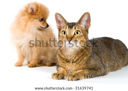 Puppy and cat in studio on a neutral background - stock photo