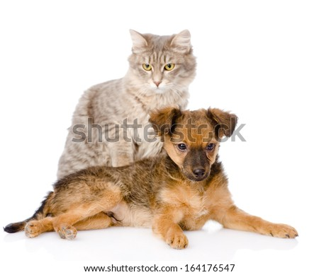 puppy and cat. isolated on white background