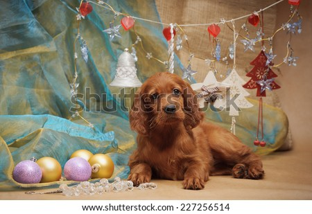 Puppy and Christmas decorations. Horizontal. Studio. - stock photo