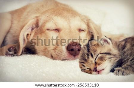 puppy and kitten - stock photo