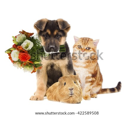 puppy and kitten and a bouquet of flowers