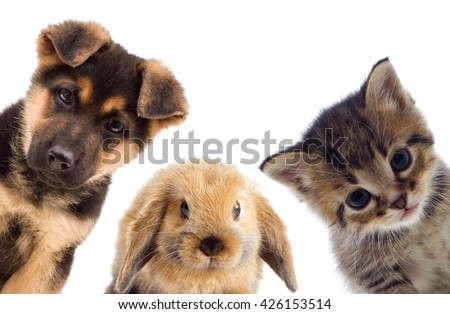 Puppy and kitten and rabbit - stock photo