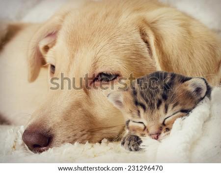 Puppy and kitten are sleeping - stock photo