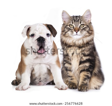 puppy and kitten , cat and dog - stock photo
