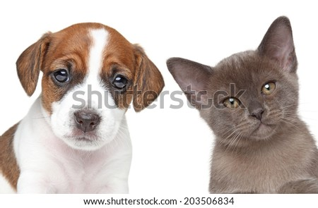 Puppy and kitten. Close-up portrait on white - stock photo