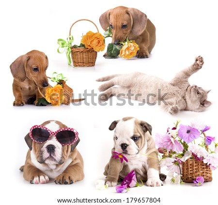 puppy and kitten , Group of cats and dogs - stock photo