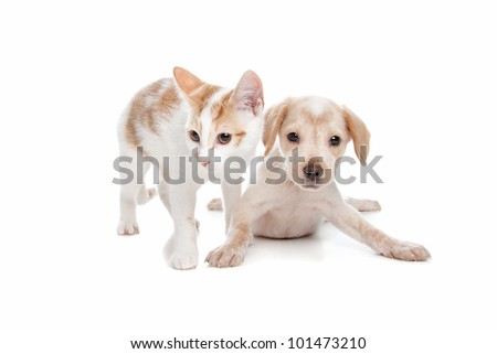 Puppy and kitten in front of a white background