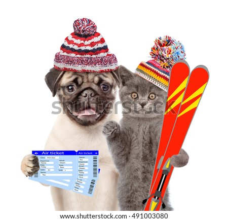 Puppy and kitten in winter hats with tickets and skiing. isolated on white background