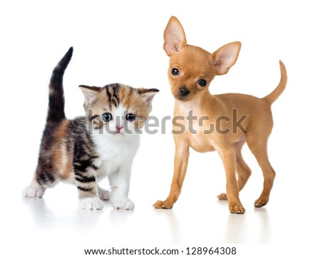 puppy and kitten isolated on white - stock photo