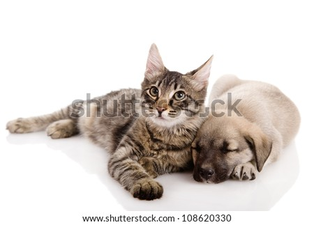 Puppy and Kitten. isolated on white background - stock photo