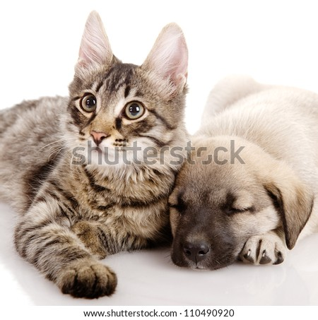 Puppy and Kitten. isolated on white background