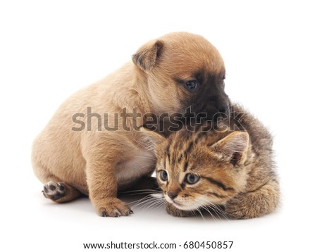 Puppy and kitten isolated on white background.