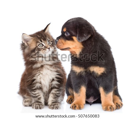 Puppy and kitten looking at each other. isolated on white background
